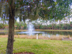 Stormwater Management Basin